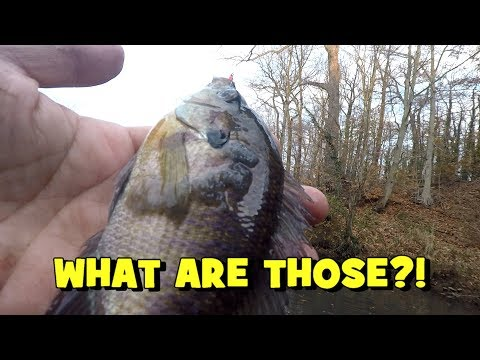 That Didn't Look Right! Poor Fish...