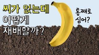 바나나는 씨가 없는데 어떻게 재배할까?|바나나에 숨겨진 놀라운 사실 Top3