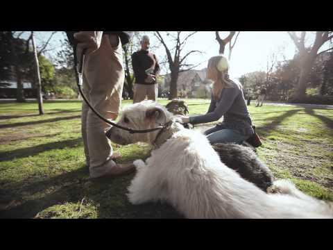 World's Greatest Pets - The Irish Wolfhound