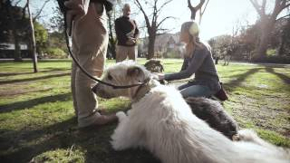World's Greatest Pets  The Irish Wolfhound