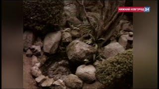 Евгений Глушаков. Документальный фильм \