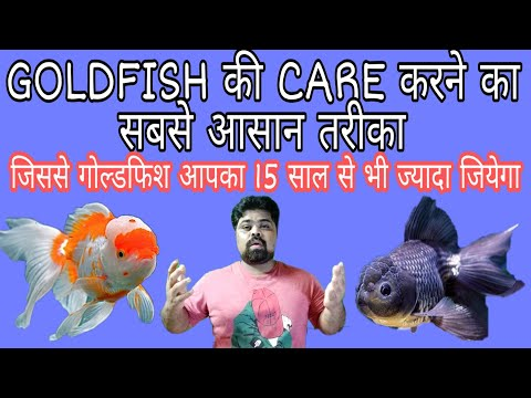 How To Care Goldfish In Hindi | Goldfish | Black Moor Goldfish | Oranda Goldfish