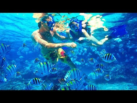 Best Southeast Florida Snorkeling