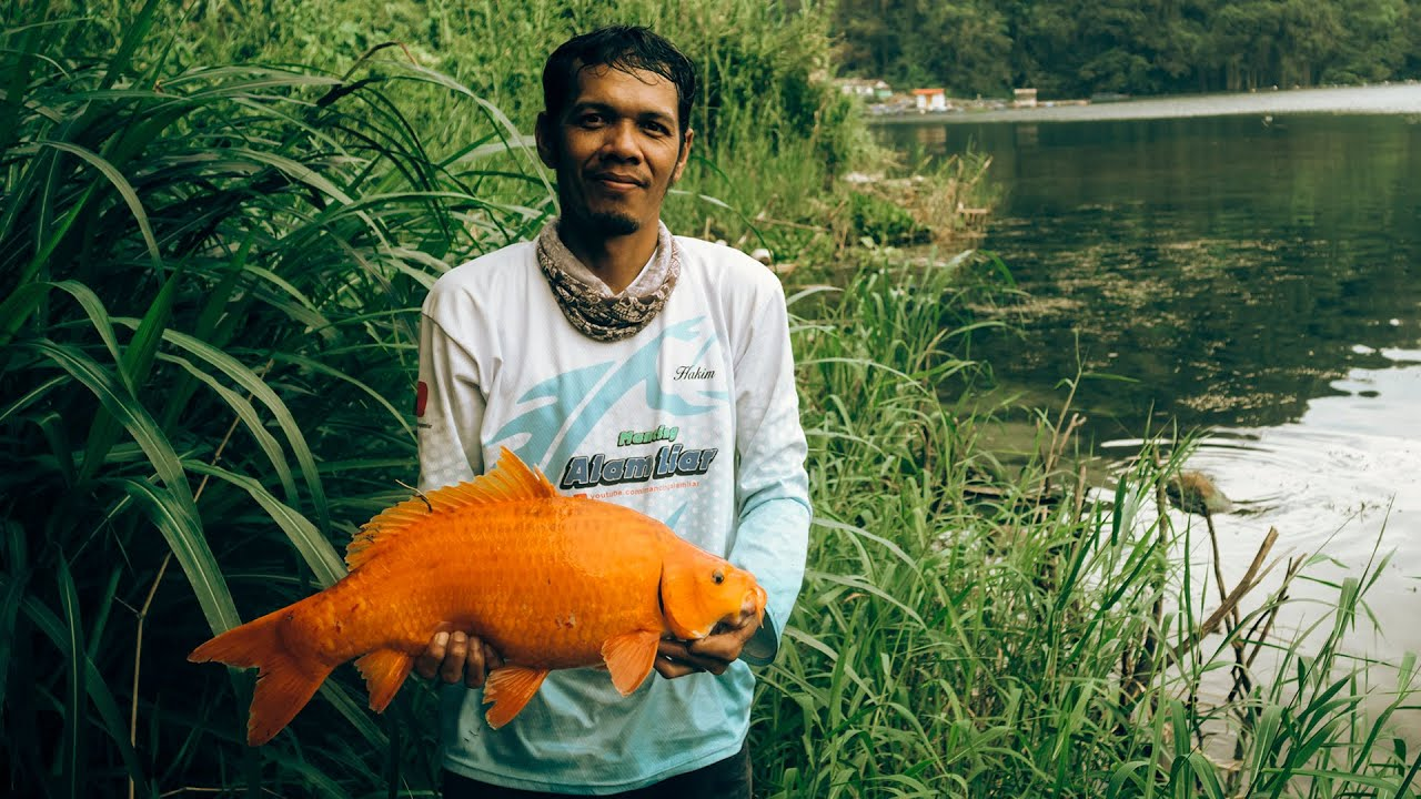 Asian Carp Fishing - Moster Danau Toba