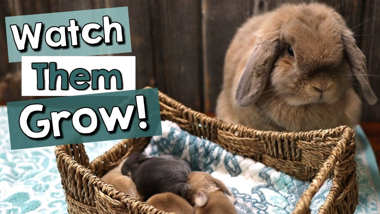 Baby Bunnies' First Week - Watch them GROW!
