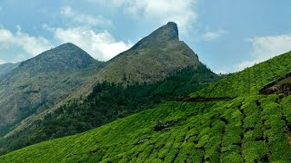 Kolukkumalai Tea Plantations  Selfie Manorama News