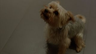 A canine inconvenience - Inside No. 9: Episode 2 Preview - BBC Two