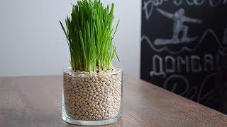 DIY ideas: Летний декор. Озеленение квартиры.