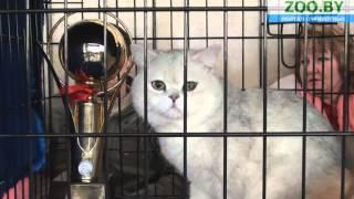 Видео-микс с выставки кошек!
