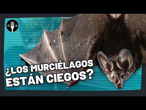 ¿Los murciélagos están ciegos?