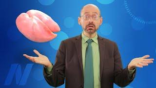 Proč mají vegetariáni vyšší riziko mrtvice – je za tím živočišná bílkovina?