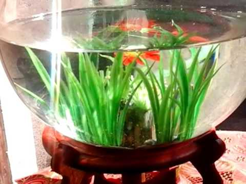Aquarium Mini Terkeren Untuk Ikan Cupang Ikan Hias Lainnya Youtube