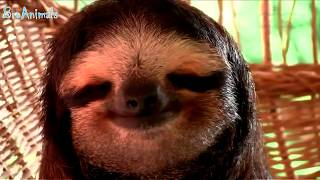 ПРИКОЛЫ С ЖИВОТНЫМИ | FUN WITH ANIMALS #316