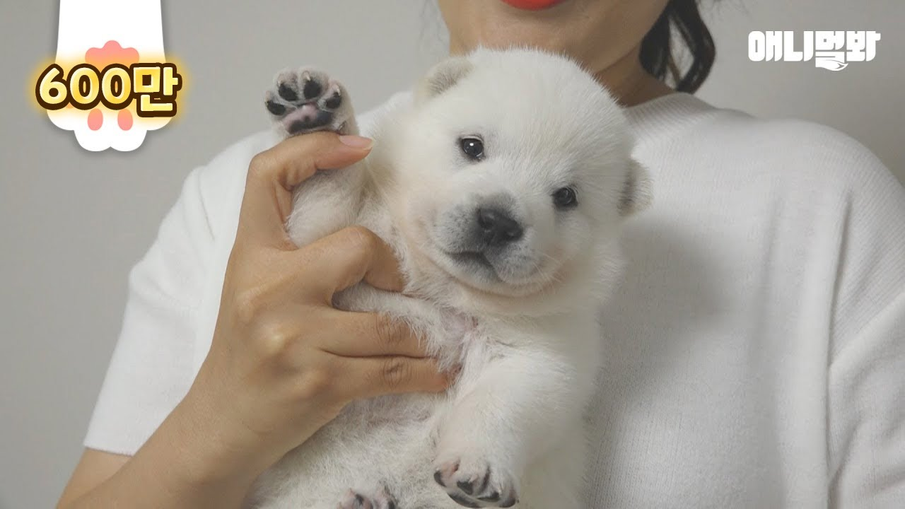 공장에 버려져있던 아기 북극곰 데려왔어요ㅣWe Brought A Polar Bear Who Was Abandoned On A Factory