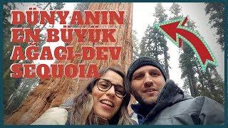DÜNYANIN EN BÜYÜK AĞACI | Sequoia and Kings Canyon National Park Gezisi!