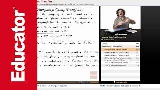 ATP Hydrolysis: Phosphoryl Transfer Reaction | Biochemistry Tutorial