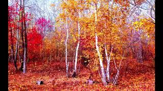 Download Октябрь.  Музыка Сергея Чекалина. October. Music by Sergey Chekalin. Mp3 and Videos