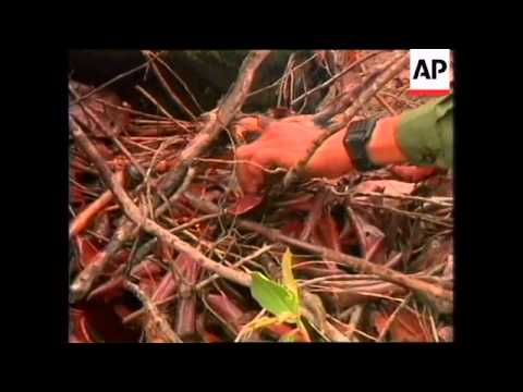 Cambodia - Pol Pot cremation