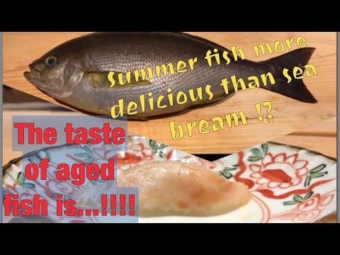 Isaki(つゆイサキ)amazing Summer Fish #how To Fillet #sushi#introducing Japanese Ingredients