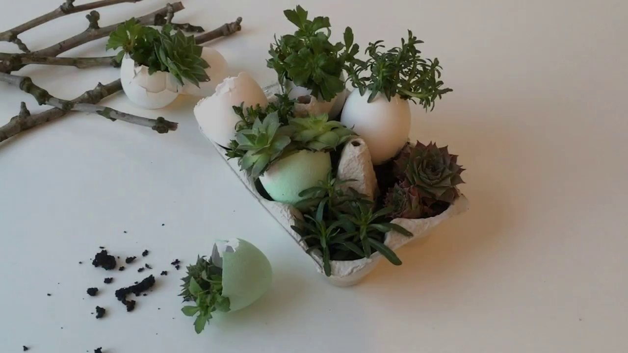 Eggshell Mini Succulent Garden: 3 Steps (with Pictures)