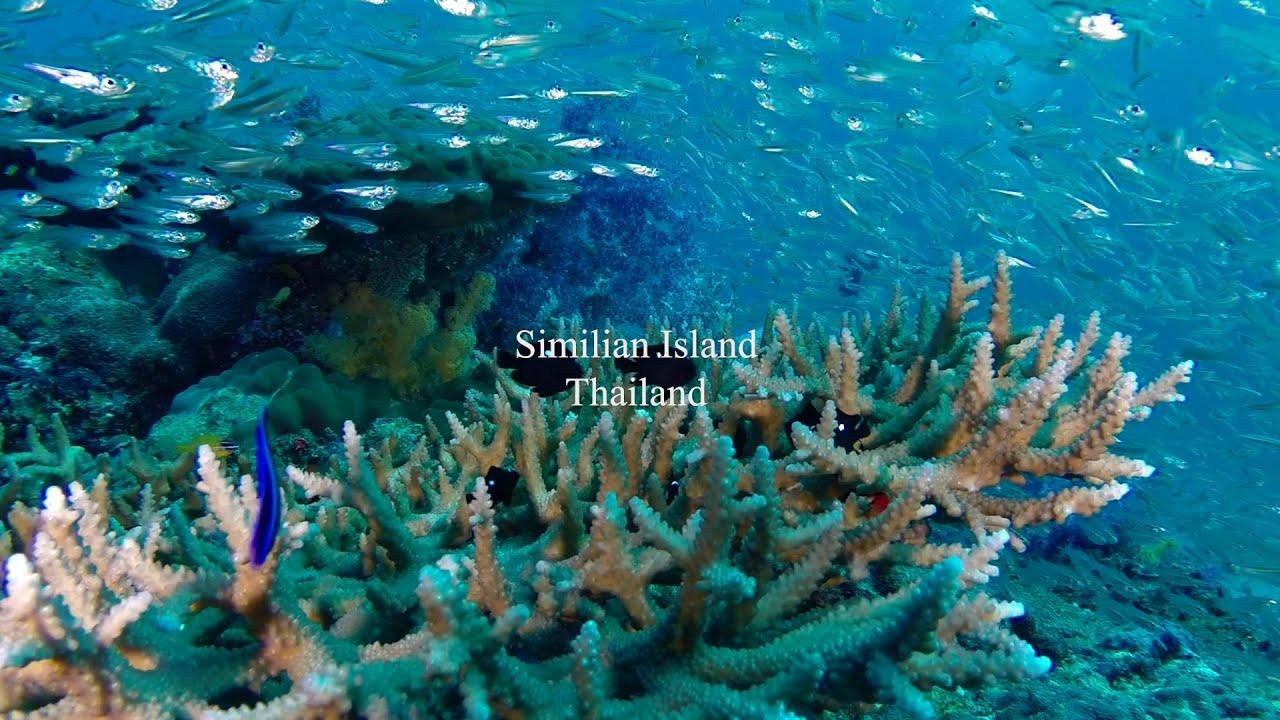 Scuba diving Similan Island Phang-nga Thailand - YouTube