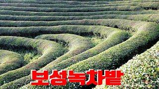 보성녹차밭, 전라도여행, 한국여행, Korea Tour, Korea trip, Korea travel, Green Tea Farm (CNN Must See #18)