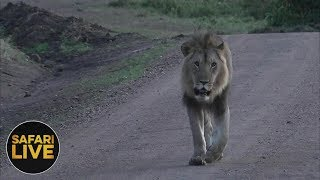safariLIVE - Sunrise Safari - November 15, 2018