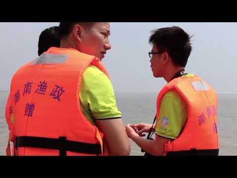 The Yangtze Finless Porpoise 守望长江江豚 【Looking China 看中国】