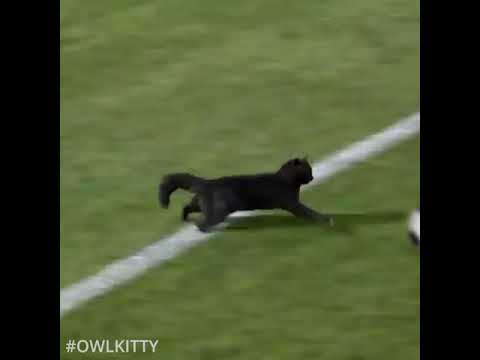 Black cat runs on field AND SCORES A GOAL