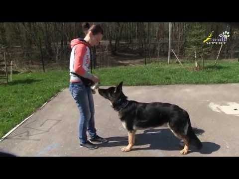 Воспитание собак, необходимость позитивной мотивации при обучении принуждением