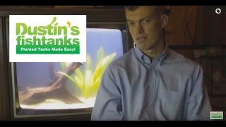 Goldfish In A Planted Tank, 4 Species Of Plants With Goldfish