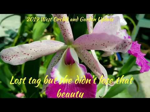 2019 WOG 'Orchid Updates'