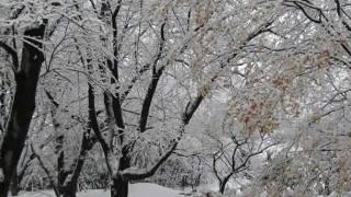 雪が降る  尾崎紀世彦 (アダモ作曲)  Tombe la neige  (Sarbatore Adamo)