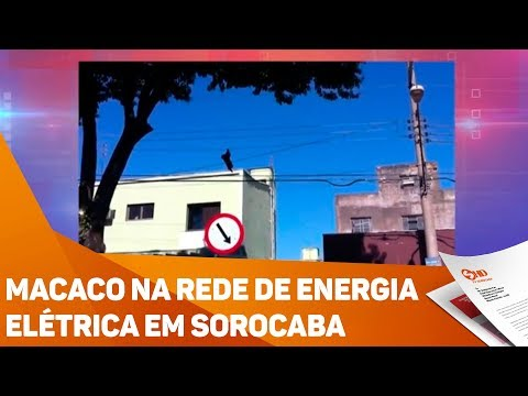 Macaco na rede de energia elétrica em Sorocaba - TV SOROCABA/SBT