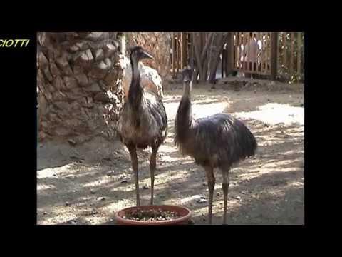 """Gran Canaria:""""Palmitos-Park Fantastico"""".Von Fausto Ciotti"""