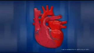 Как работает сердце человека