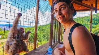 "EXPLORING ""MONKEY MOUNTAIN"" (Cuteness Overload)"