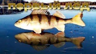 Окунь зимой рыбалка на озере Волоярви первый лёд Perch in winter fishing on Lake Voloyarvi