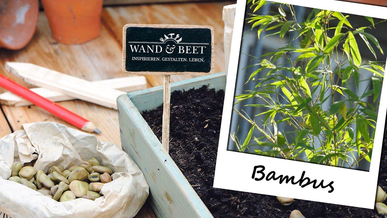 bambus kaufen und pflegen youtube. Black Bedroom Furniture Sets. Home Design Ideas