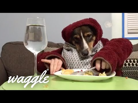 Dogs With Human Hands?! | Funny Dog Compilation