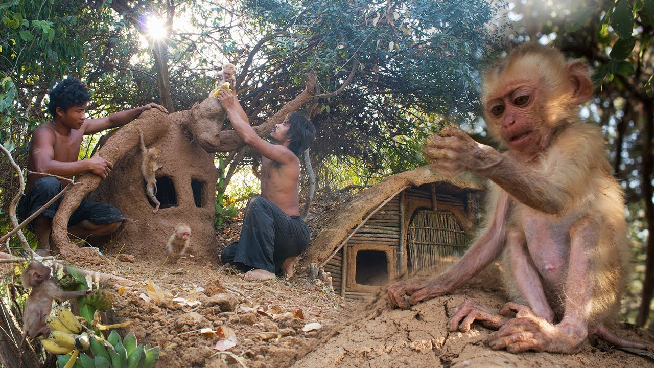 Build monkey's house for Cutest Monkey baby using  wood and mud |Primitive Technology,Building