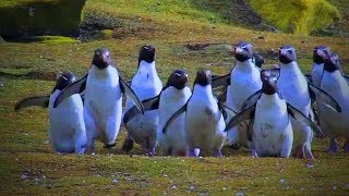 Best of Funny Penguins 😊🐧 Funny And Cute Penguins (Full) [Funny Pets]