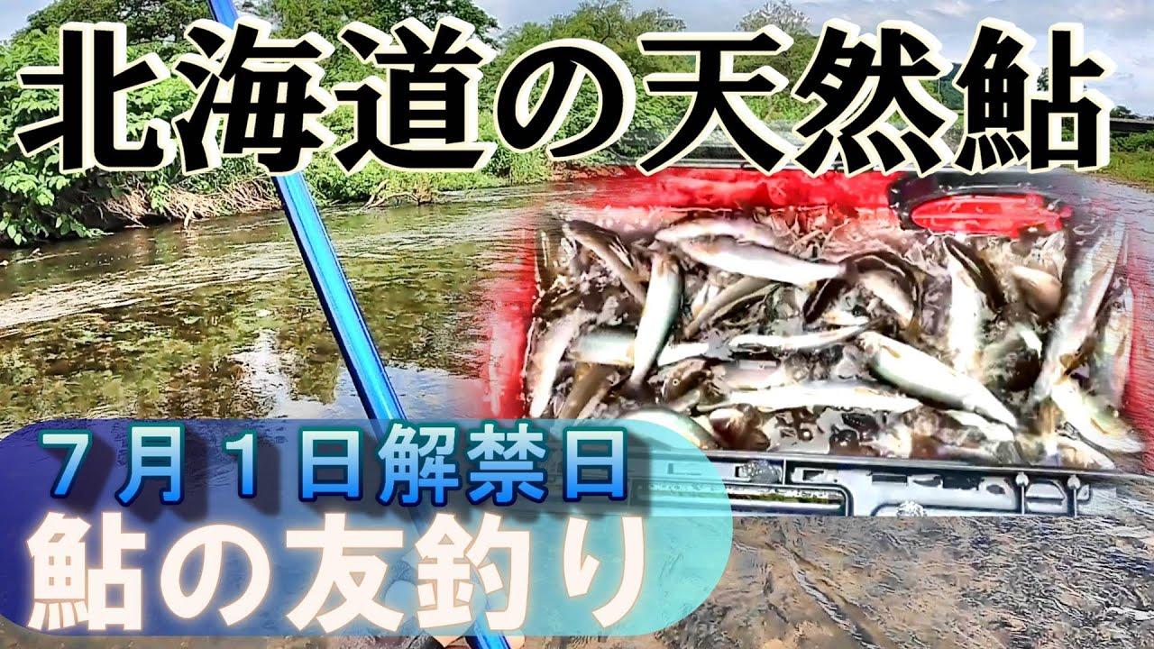 【鮎の友釣り】118匹!解禁日から沢山掛かりました~