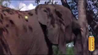 Пьяные звери Африки!