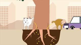 Überlebenskünstler Stadtbaum