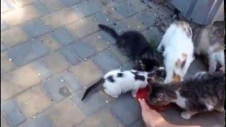 Бездомные котята.