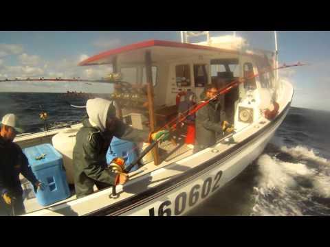 Bluefin Tuna  Prince Edward Island Bruce Brothers Fishing Charters