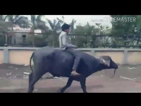 Drivery Gurnam Bhullar