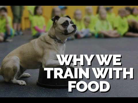 Why we Train with Food
