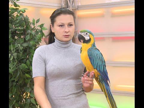 """Оранжевое утро"". Регина Садритдинова и попугай Ара."